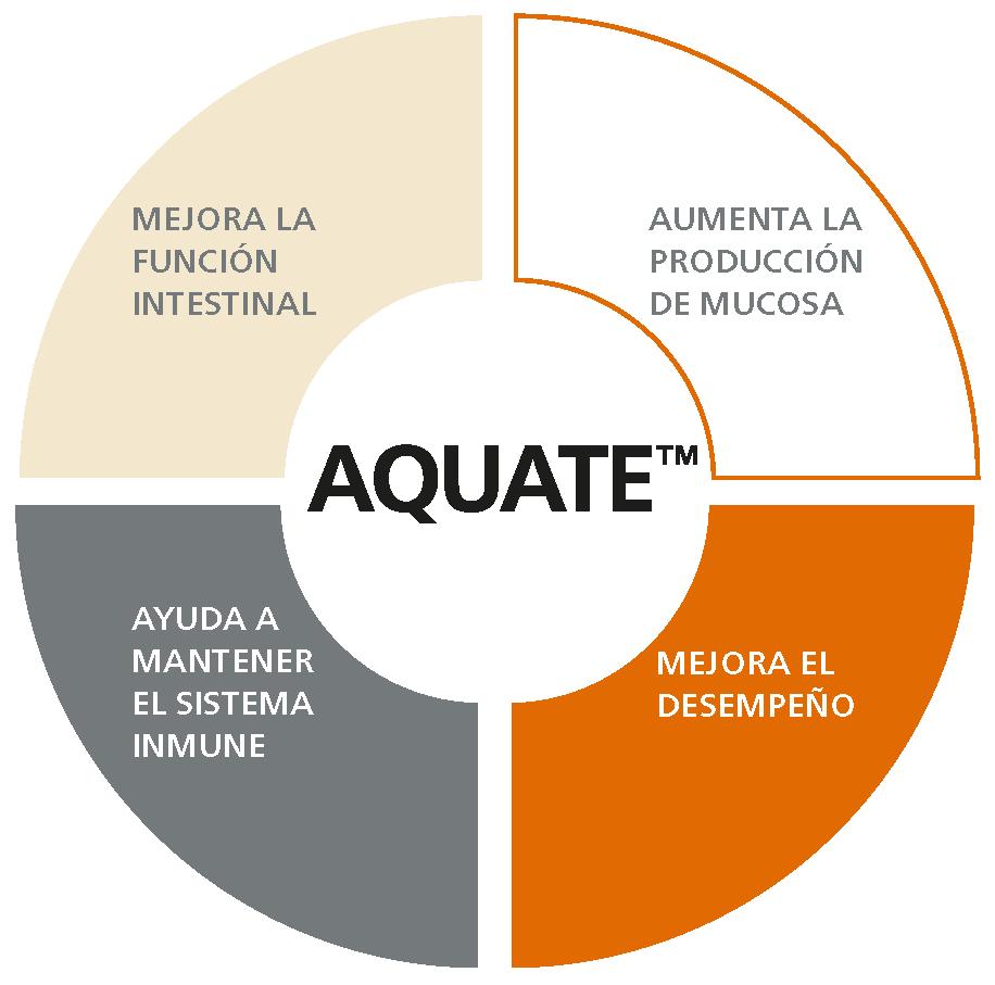 aquate.png