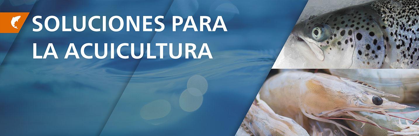 header-acuicultura.jpg