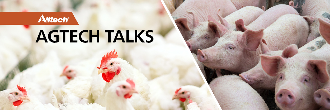 Alltech Agtech Talks Swine and Poultry Combined Banner