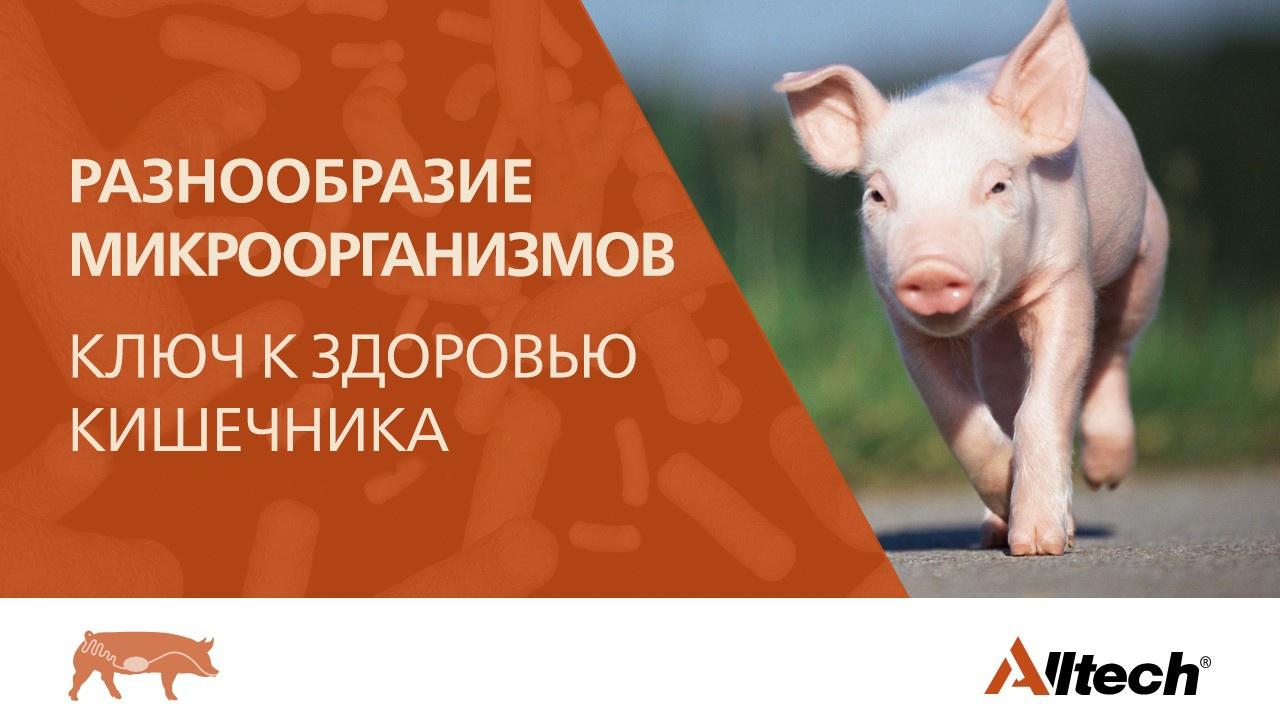 7117_PIG Webinar Banner in Russian v2.jpg
