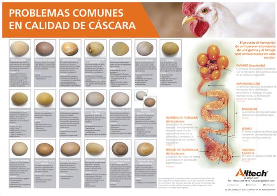 Calidad de cascara - egg shell quality poster - Spanish - blurred-1