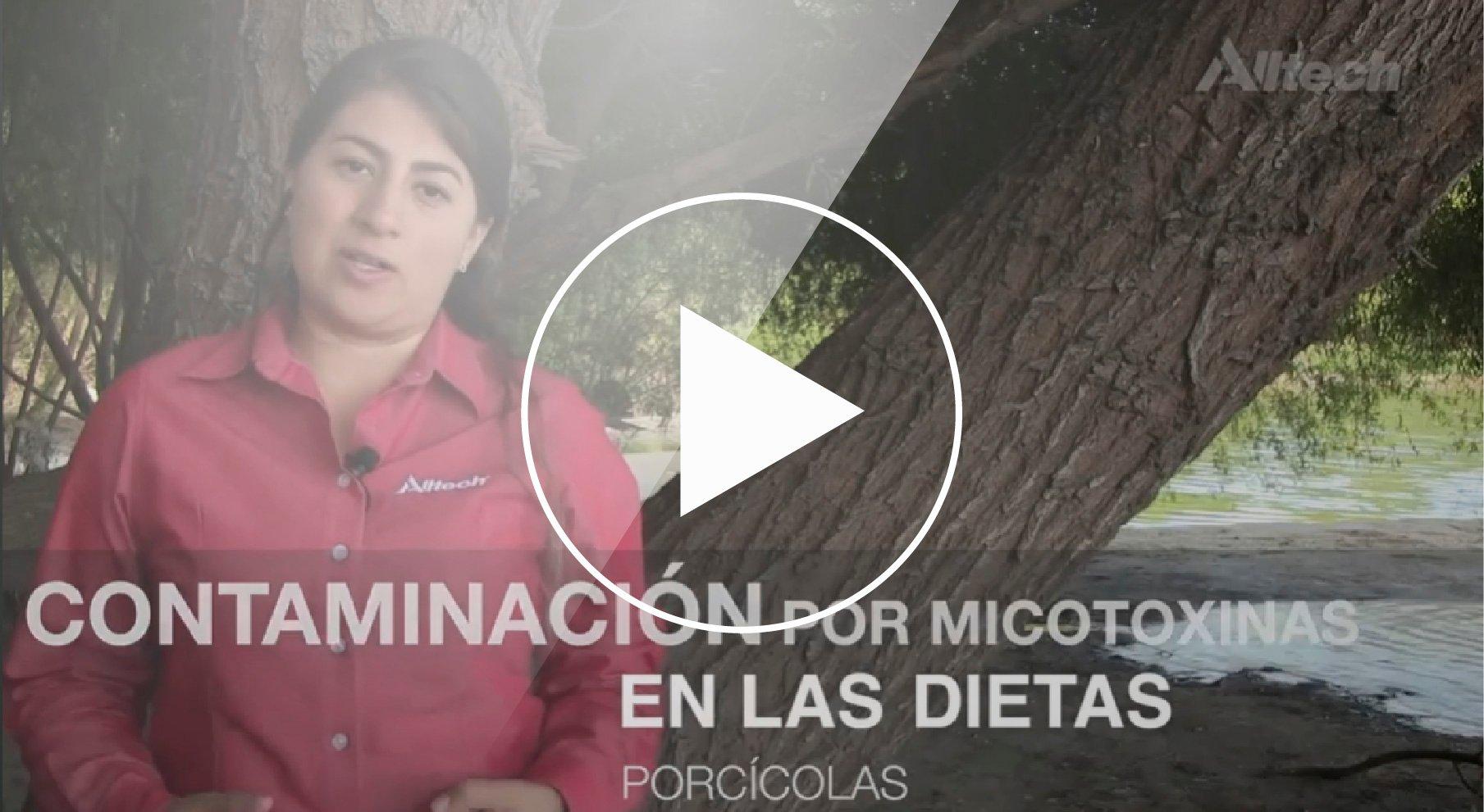 Cotaminación por micotoxinas en las dietas porcícolas-02