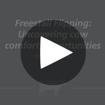 FreestallFalling_play_button