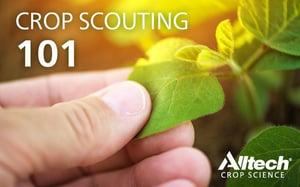 Jun8_cropscouting101_blog_800x500.jpg