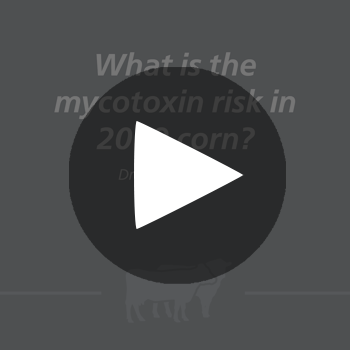 MycotoxinCornRuminant_play_button
