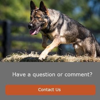 Pet - Contact Us.jpg