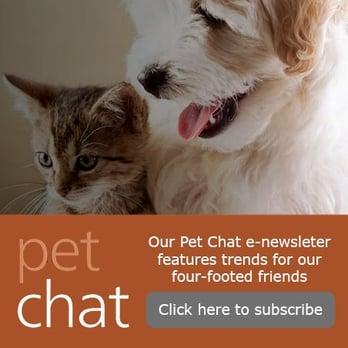 Pet Chat Square.jpg