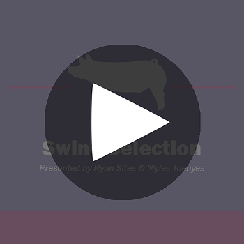 Show-Rite-Stock-Show-Classroom-Webinar-Button-_-Swine-Selection_playbutton