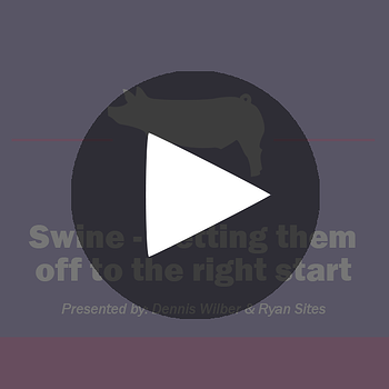 Show-Rite_Classroom_Swine_GettingThemOffRight_playbutton