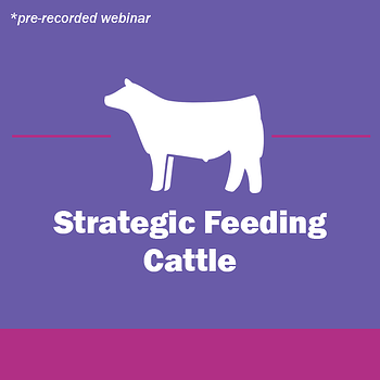 Show-Rite_Stock_Show_Classroom_Webinar_Cattle_StrategicFeeding-2