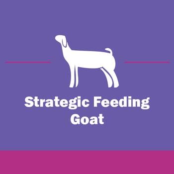 Show-Rite_Stock_Show_Classroom_Webinar_Goat_StrategicFeeding-2
