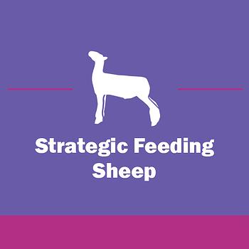 Show-Rite_Stock_Show_Classroom_Webinar_Sheep_StrategicFeeding-2