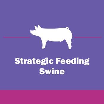 Show-Rite_Stock_Show_Classroom_Webinar_Swine_StrategicFeeding-2