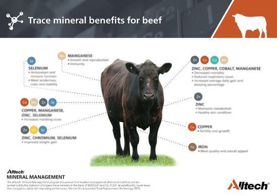 Trace Minerals Benefits for Beef Poster - Blurred