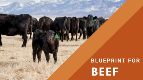 Beef blueprint overview