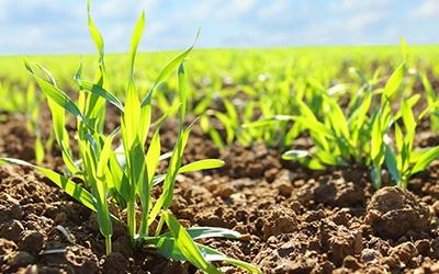 Crop Science: SESIÓN DE ENFOQUE