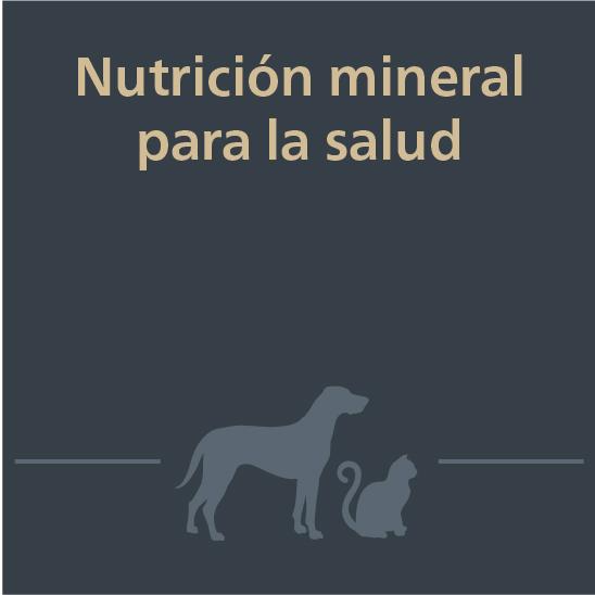 Mascotas webinar nutrión mineral