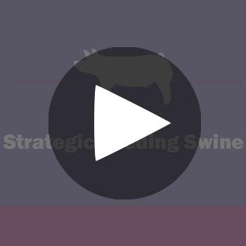 Show-Rite-Stock-Show-Classroom-Webinar-Button_StrategicFeedingSwine_playbutton