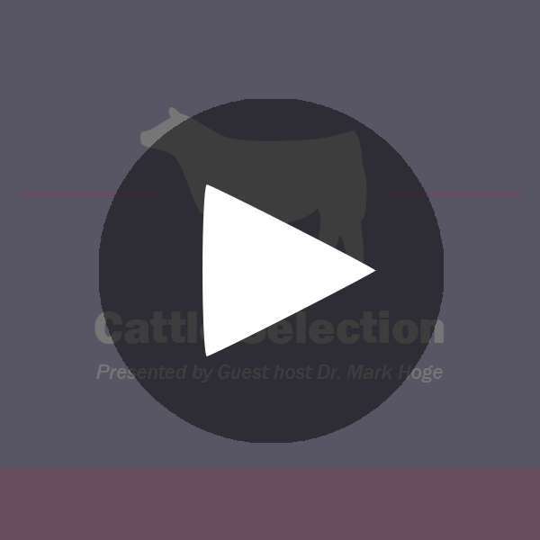 Show-Rite_Classroom_Cattle_CattleSelection_playbutton