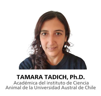 Tamara Tadich