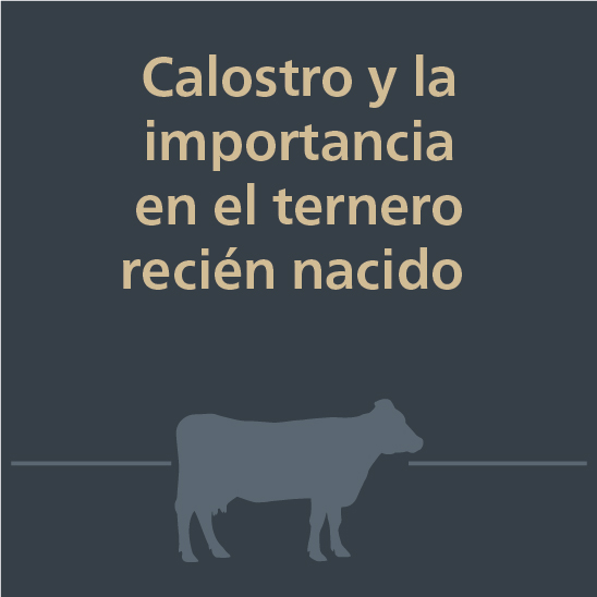 Webinrs jorge delgado-Calostro y la importancia en el ternero recién nacido-1